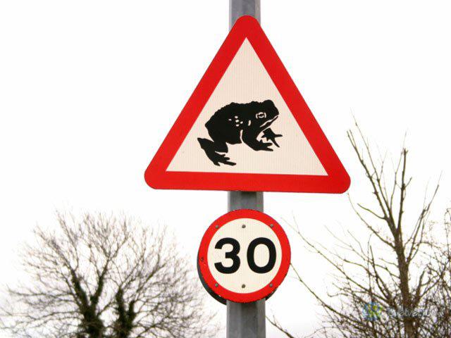 Внимание! Лягушки на дороге