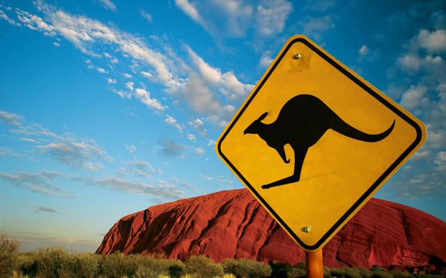 Предупреждение о возможном появлении кенгуру на дороге
