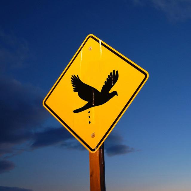 Осторожно, птицы