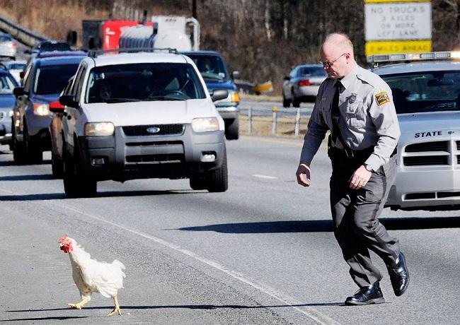 В штате Джорджия курицам нельзя переходить дорогу