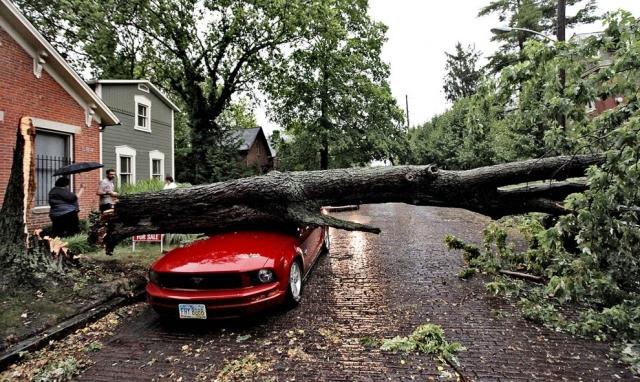 Исковое заявление к управляющей компании по ремонту автомобиля на который упало дерево