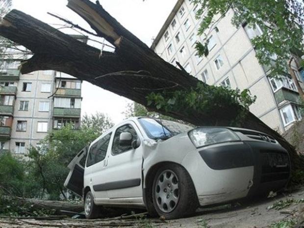 Ваши планы может сломать упавшее дерево