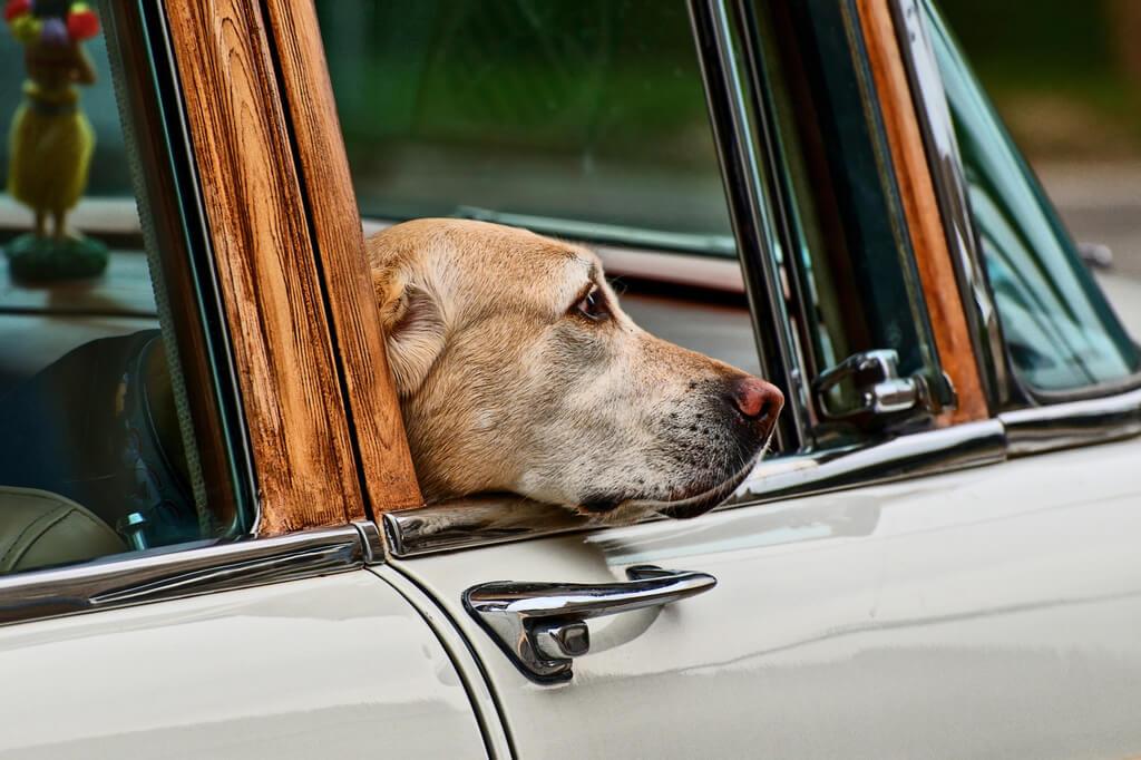 Собака в окне автомобиля